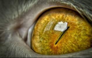 تیزبینترین چشمهای روی زمین