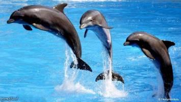 دلفین ها ما را به چه شکل می بینند؟