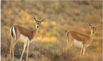 دستگیری 6 شکارچی متخلف در منطقه زرآباد خوی