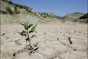 توسعه کشاورزی در ۴ حوضه ممنوع شد