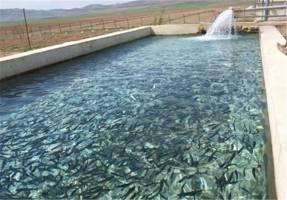 درآمد 300 میلیونی عضو هیات علمی دانشگاه از پرورش ماهی