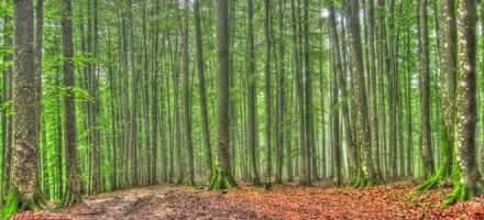 تور جنگل راش(پشت پرچین خیال)