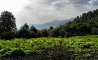 جنگل الیمستان؛ آشنایی بایکی از مقاصد تورهای طبیعت گردی ایران