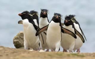 خطر جدی انقراض در کمین پنگوئنها