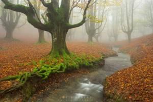 زیباترین جنگل های جهان را بشناسید