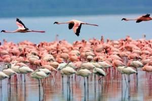 افزایش تراز آبی دریاچه ارومیه به رغم ثبات در میزان بارش سالانه