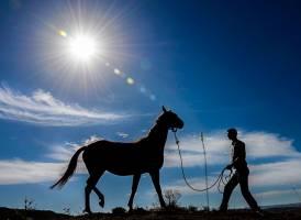 یازدهمین جشنواره زیبایی اسب ترکمن در کلاله برگزار میشود
