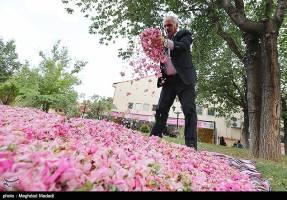 جشنواره ملی گل غلتان در کاشان برگزار شد