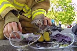 آتشنشانان فداکار و نجات جان موجوداتی بیگناه