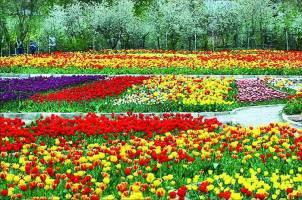 ۲۵ خرداد؛ روز ملی گل و گیاه