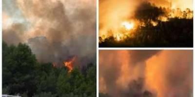 سوختن 560 هکتار از جنگل های جنوب فرانسه