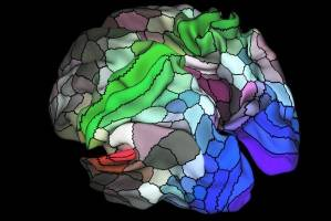 کشف ۱۰۰ ناحیه جدید در مغز