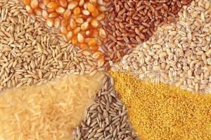 علل افزایش نرخ خوراک دام/ وزارتجهاد پاسخگوی گرانی ذرت باشد