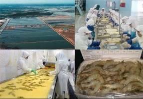 پرورش میگو صنعت ارزآور و اشتغالزا