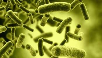تلاش محققان در زمینه معرفی سویههای ارزشمند پروبیوتیک برای صنایع غذایی