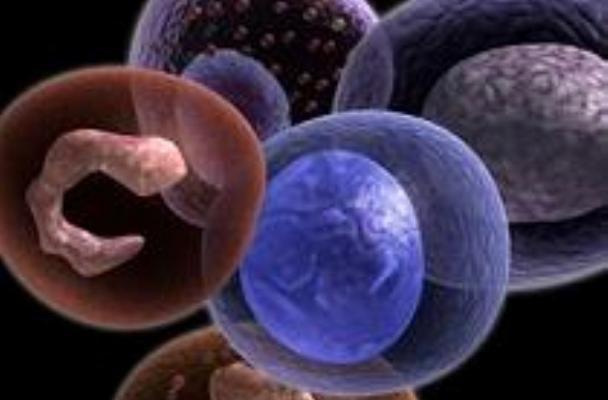 نوعی از سلول های بنیادی سرطانی شناسایی شد