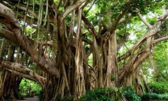 بزرگترین درخت مصنوعی جهان در دوبی+تصاویر