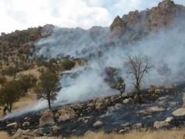 آتش سوزی در جنگل های گیلانغرب