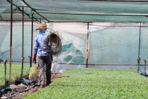 پرداخت بیمه کشاورزان تا ۱۰ روز آینده