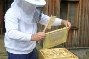 هشدار درباره عرضه عسلهای تقلبی