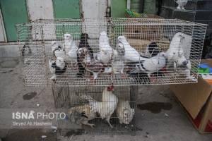 ابلاغ اخطاریه زیست محیطی به مراکز خرید و فروش پرندگان