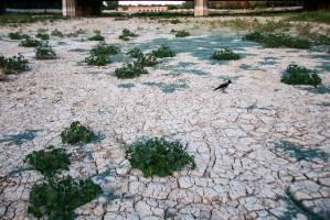 یک میلیارد دلار از صندوق توسعه ملی برای احیای زاینده رود تخصیص یابد