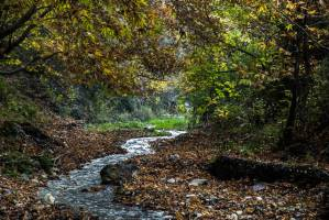 سازمان جنگل ها برای مدیریت 83 درصد مساحت کشور، ابزارهای لازم را ندارد