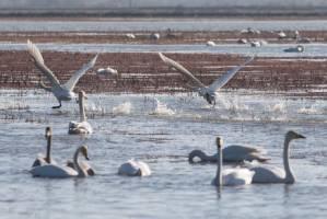 مردم تا اطلاع ثانوی از خرید گوشت پرندگان شکار خودداری کنند