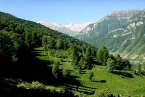 طرح استراحت جنگلها به معنای رهاسازی جنگلها نیست
