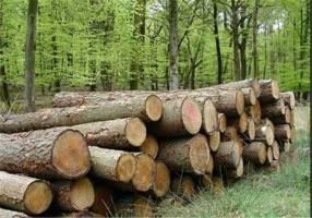 پیشنهاد دولت، اجرای طرح تنفس جنگل های هیرکانی از ابتدای برنامه ششم توسعه بود