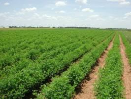 سرمایهگذاری ۲۰۰ میلیون یورویی کره جنوبی در کشاورزی ایران