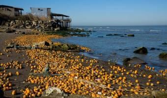 ماجرای ریختن پرتقالها به دریای خزر