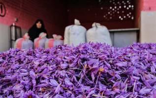 راه اندازی بورس زعفران تا پایان دهه فجر