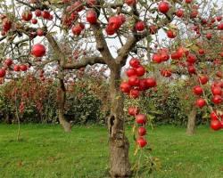 اختصاص ۲۰ درصد از منابع صندوق حمایت کشاورزی به صادرات