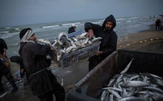 قیمت جدید انواع ماهی در بازار اعلام شد