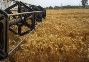 تورم بخش کشاورزی ۱۰ درصد کاهش یافت