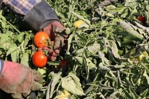 ارتقای سلامت ۸محصول کشاورزی معطل بودجه