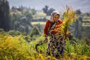 نمره دولت در بخش کشاورزی چند است؟