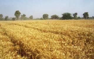 افزایش تولید محصولات کشاورزی