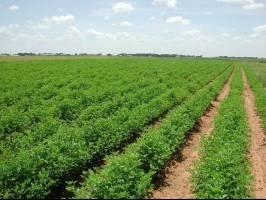 آمادگی اتحادیه اروپا برای همکاریهای کشاورزی با ایران