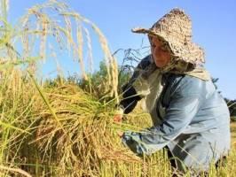توصیههای 3 روزه هواشناسی کشاورزی