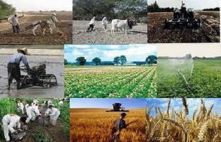 قیمت محصولات کشاورزی و دامی چقدر افزایش یافته است؟