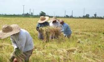 توصیههای سه روزه هواشناسی کشاورزی