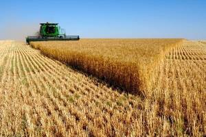 عبور تولید غلات ایران از ۲۰ میلیون تن در سال زراعی جاری