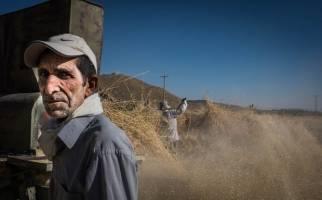 دولت پول گندمکاران کردستانی را نداد