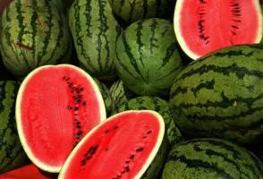 صادرات هندوانه رکورد شکست