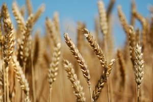 باز هم تاخیر در اعلام نرخ خرید تضمینی محصولات کشاورزی
