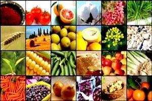 نرخ خرید تضمینی محصولات کشاورزی تا ماه آینده اعلام میشود