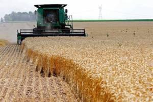 عرضه گندم صادراتی ۶ استان در بورس کالا