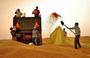 رد ادعای «گندم خاکآلود»